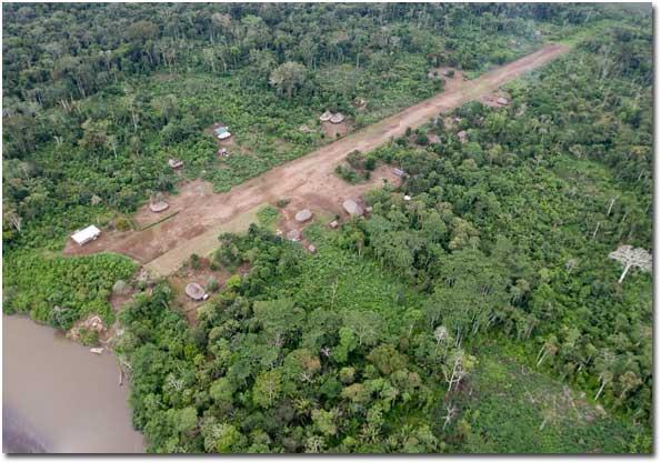Amazonica Pic 2